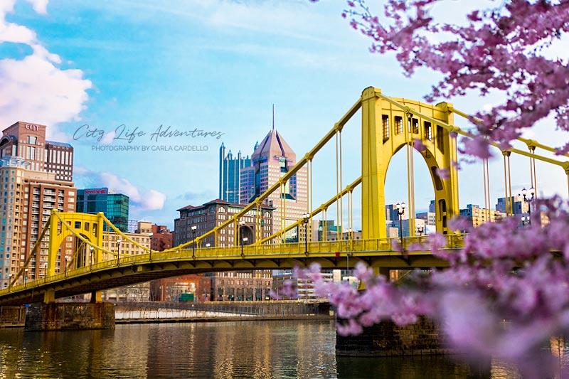 Pittsburgh-Cherry-Blossoms-by-Carla-Cardello-portfolio-3461